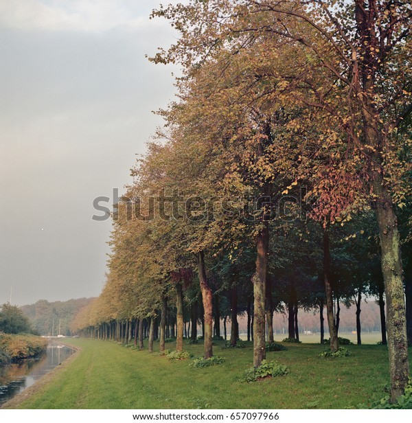 Row of trees along water in the autumn