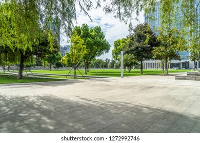 Row of trees beside pavement in downtown district