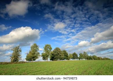 Row trees and deep blue sky