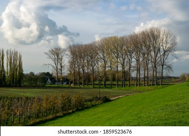 Row of trees in the Dutch district between Beuningen and Weurt, Typical Dutch Nature scen [hotographed during fall