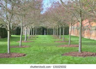row of trees in an english countryside scene