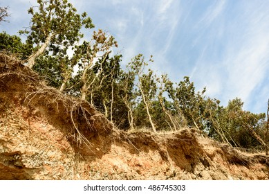 Row of trees exposed to seaside cliff face erosion with crumbling earth and dirt.