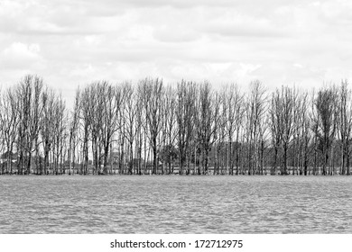 Row of trees in flooded landscape - black and white image