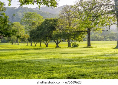 A row of trees with green leaves in a line at the Queen's Park Savannah in Port-of-Spain, Trinidad