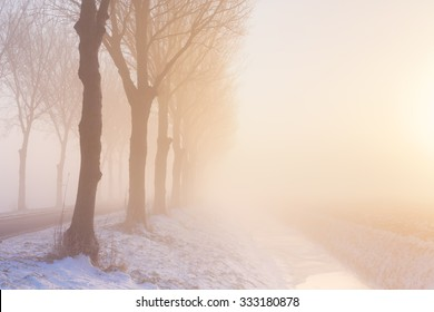 A row of trees on a foggy morning at sunrise. A typical image from the historic Beemster polder in The Netherlands.
