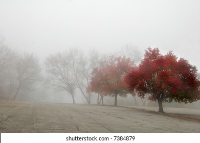 row of trees on a foggy morning
