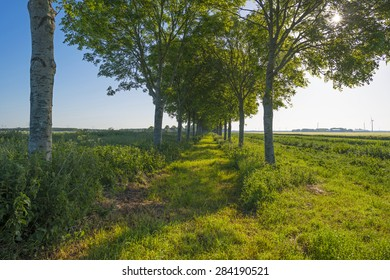Row of trees in sunlight along a field in spring