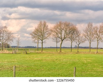 Row of trees in winter with setting sun