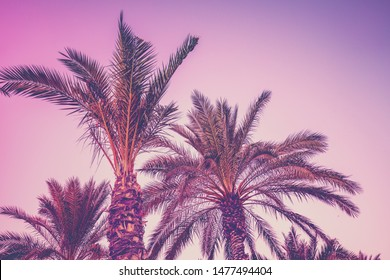 Row of tropic palm trees against sunset sky. Silhouette of tall palm trees. Tropic evening landscape. Nature landscape.