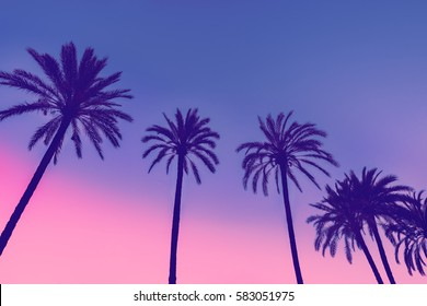 Row of tropic palm trees against sunset sky. Gradient color. Silhouette of tall palm trees. Tropical evening landscape. Diagonal purple pink gradient color. Beautiful tropic nature.