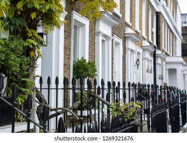 A row of typical upmarket London homes with black iron fence and creeper plants