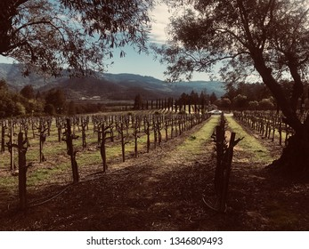Row of a vineyard in Spring just before the first signs of grapes start to show. The picture is framed by tree canopies with mountains in the distance all under a perfectly clouded sky.