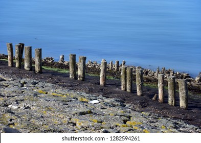 Row of weathered wooden poles on a dike on the coast of Oosterschelde estuary on the island of Noord-Beveland, The Netherlands, with layers of basalt, seaweed and tarmac