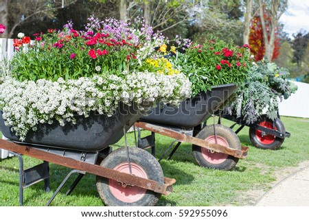 Row Of Wheelbarrow Planters With Beautiful Garden Flowers