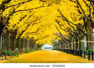 Row of yellow ginkgo tree in autumn. Autumn park in Tokyo, Japan.