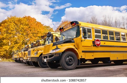 Row of yellow school buses in a parking lot on a sunny autumn day. Golden fall trees in the background.  Back to school concept.
