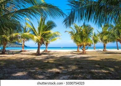A row of young coconut trees in front of the popular Sunrise beach on Lipe Island, Satun Province, Thailand