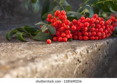 Rowan berries on concrete pavement