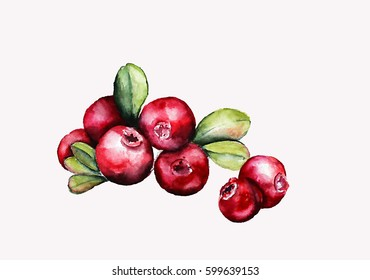 rowan berry illustration