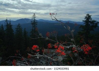 Rowanberries and Velký Javor (Grosser Arber) mountain from Svaroh, Sumava mountains (Bohemian forest, Bayerischer Wald) - Shutterstock ID 1529033981