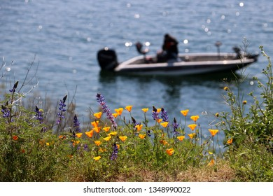 Rowboat in background near a field of California poppies