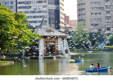 Rowing in Taichung Park, a famous tourist spot in Taichung, Taiwan.October 15,2014
