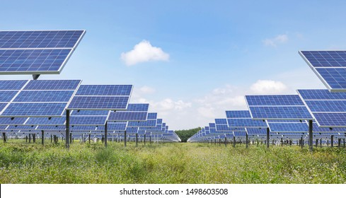 Rows array of   Solar cells or solar module or solar panels in solar power plant turn up skyward absorb the sunlight from the sun use light energy to generate electricity on blue sky