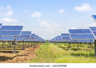 rows array of solar cells or photovoltaics in solar power station alternative clean renewable energy under blue sky