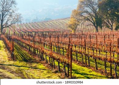 Rows of  autumn grapevines on hillside Napa Valley California - Shutterstock ID 1890310984