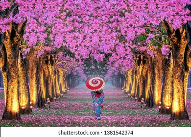Rows of Beautiful pink flowers trees and Kimono girl.