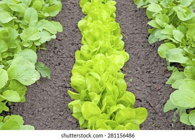 Vegetable Garden Rows Images Stock Photos Vectors Shutterstock