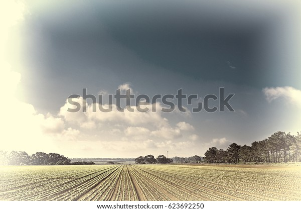 Rows of Fresh Young Green Seedling in Portugal, Stylized Photo