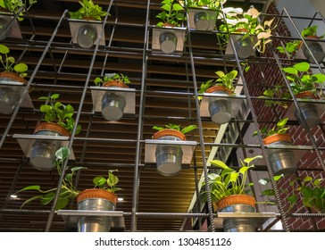 Rows of Golden Pothos (Devil's Ivy) in a pots as a decoration on the metal frame.
