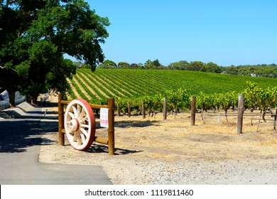Rows of grape vines with wagen wheel gate, in Australia's major wine growing regiion, Barossa Valley South Australia.