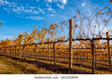 Rows of grape vines in a winery