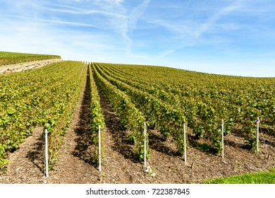 Rows of grapevine in a Champagne vineyard under a blue cloudy sky.