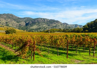 Rows of Grapevines in Napa Valley California