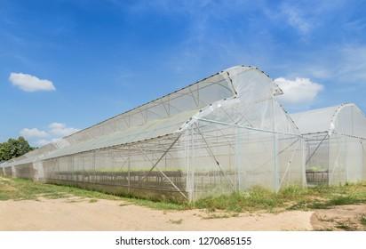 Rows of green house for organic plant growing nursery farm under blue sky