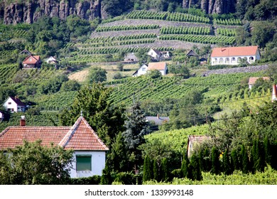 Rows or lines of a hungarian vineyard in Somlo. Somlo hill with traditional Hungarian homes with a red roof in the background