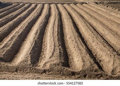 Rows pattern in a plowed field -