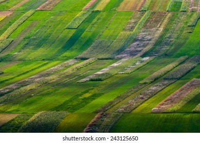 Rows of plants in a cultivated field