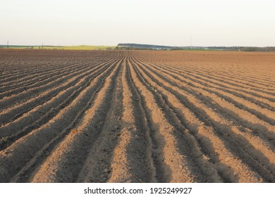 Rows of plough land with planted potatoes in spring, empty clean agriculture field, background and texture for your design, copy space, eco farming and organic agriculture concept