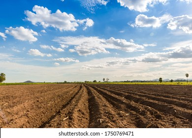 Rows of soil before planting. Furrows row pattern in a plowed field prepared for planting crops in spring. view of land prepared for planting and cultivating the crop.