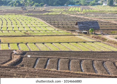 Rows of soil for planting. Furrow row pattern in a plowed field, soil preparation for planting crops