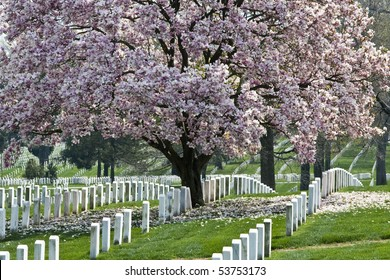 Rows of tombstones at Arlington National Cemetery