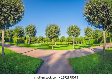 Rows of trees and bushes park. Perfectionism symmetry and geometry in garden. perspective fisheye lens