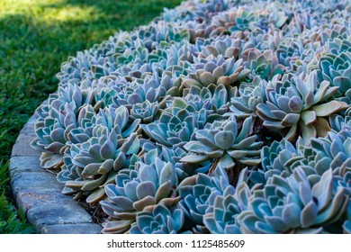 Rows upon rows of succulent plants growing in the garden of Addo Wildlife