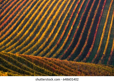 Rows Of Vineyard Grape Vines.Autumn Landscape With Colorful Vineyards.Grape Vineyards Of Czech Republic.Abstract Background Of Autumn Vineyards Rows.Autumn Color Vineyard Landscape. Line and Vine