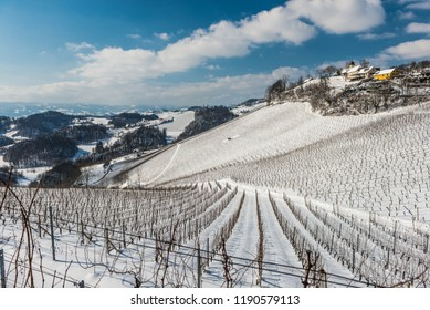 Rows of vineyards covered with white snow in sunny winter day. Styria, Austria