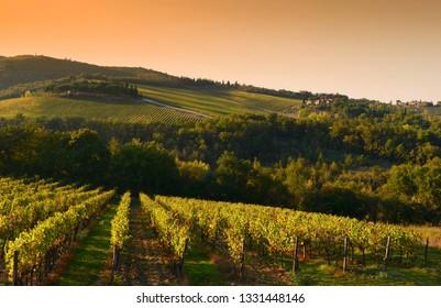 Rows of vineyards in Tuscany near Castellina in Chianti (Siena). Italy
